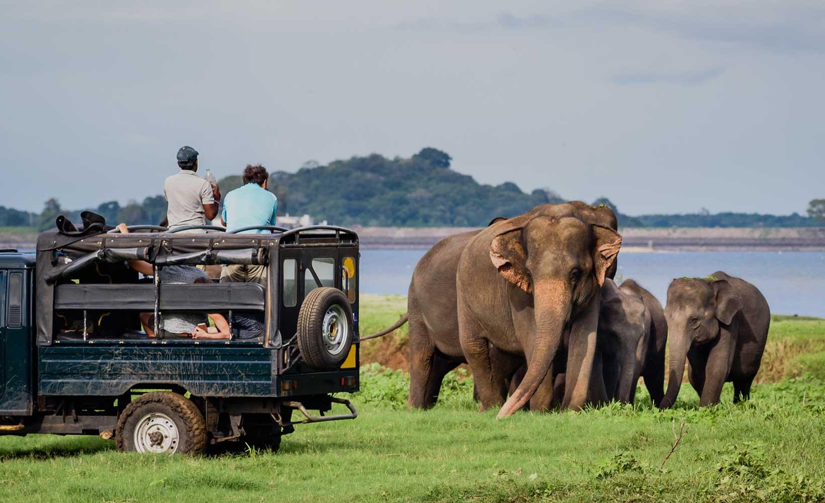 Must Do Wildlife Experiences in Sri Lanka